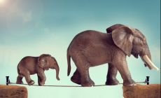 mother and baby elephant walking on a tightrope
